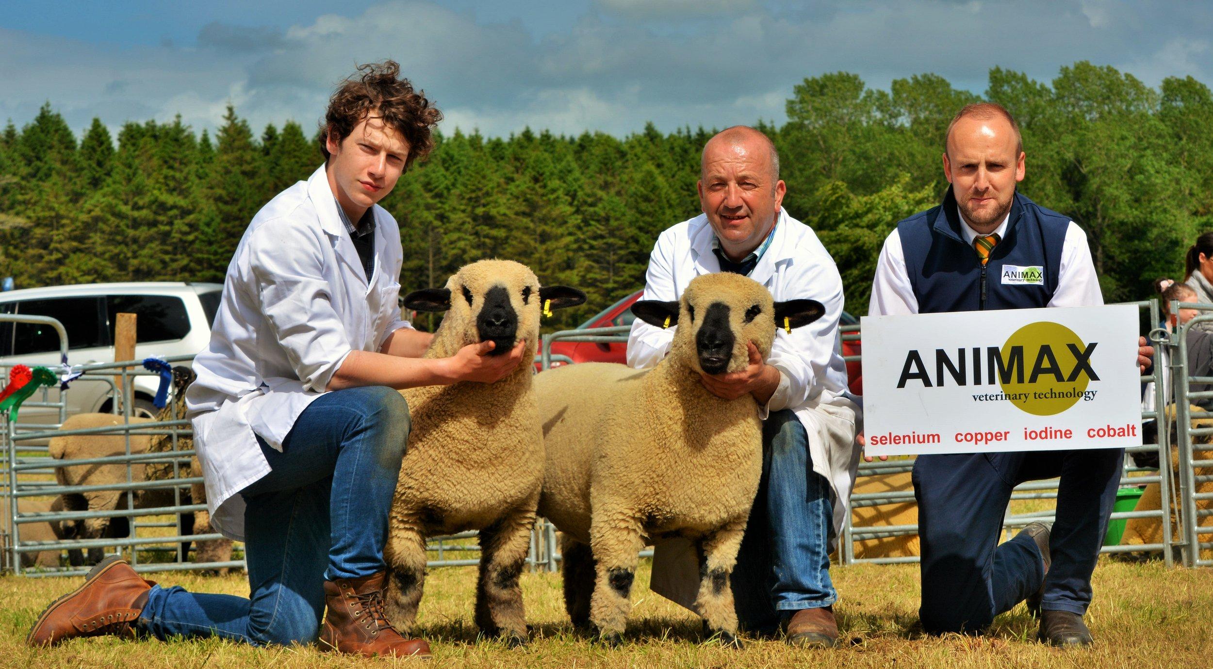 Pair of Lambs winner, Aimney