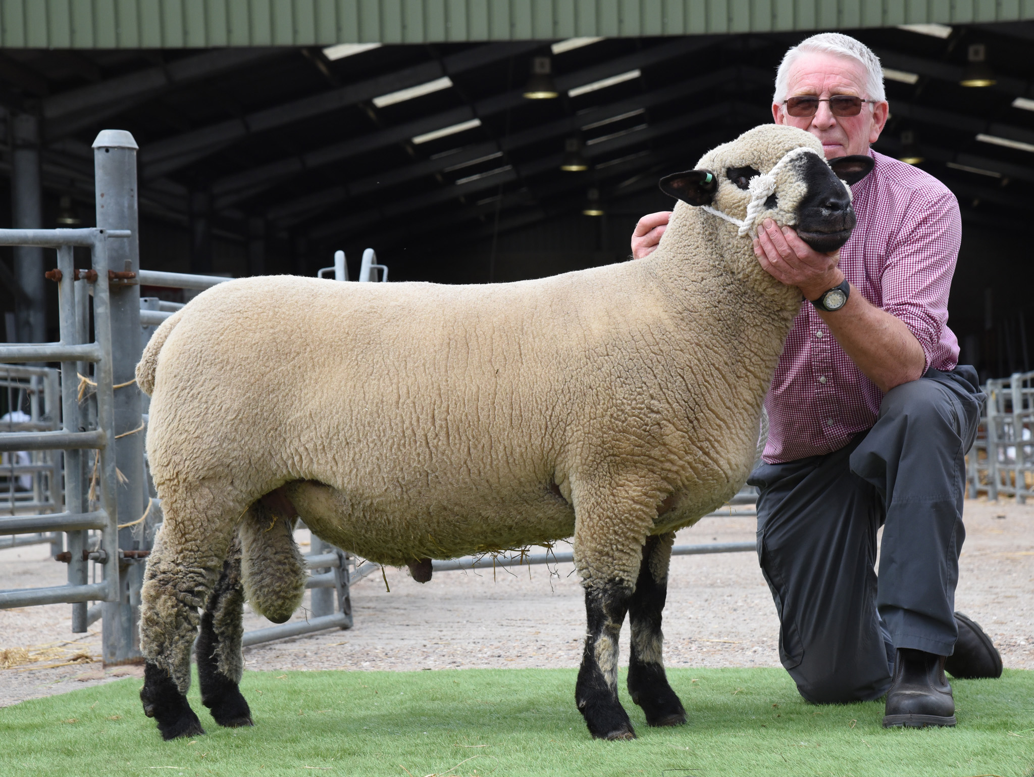 Shearling Ram, 1180gns from Brand, EAST FORTUNE