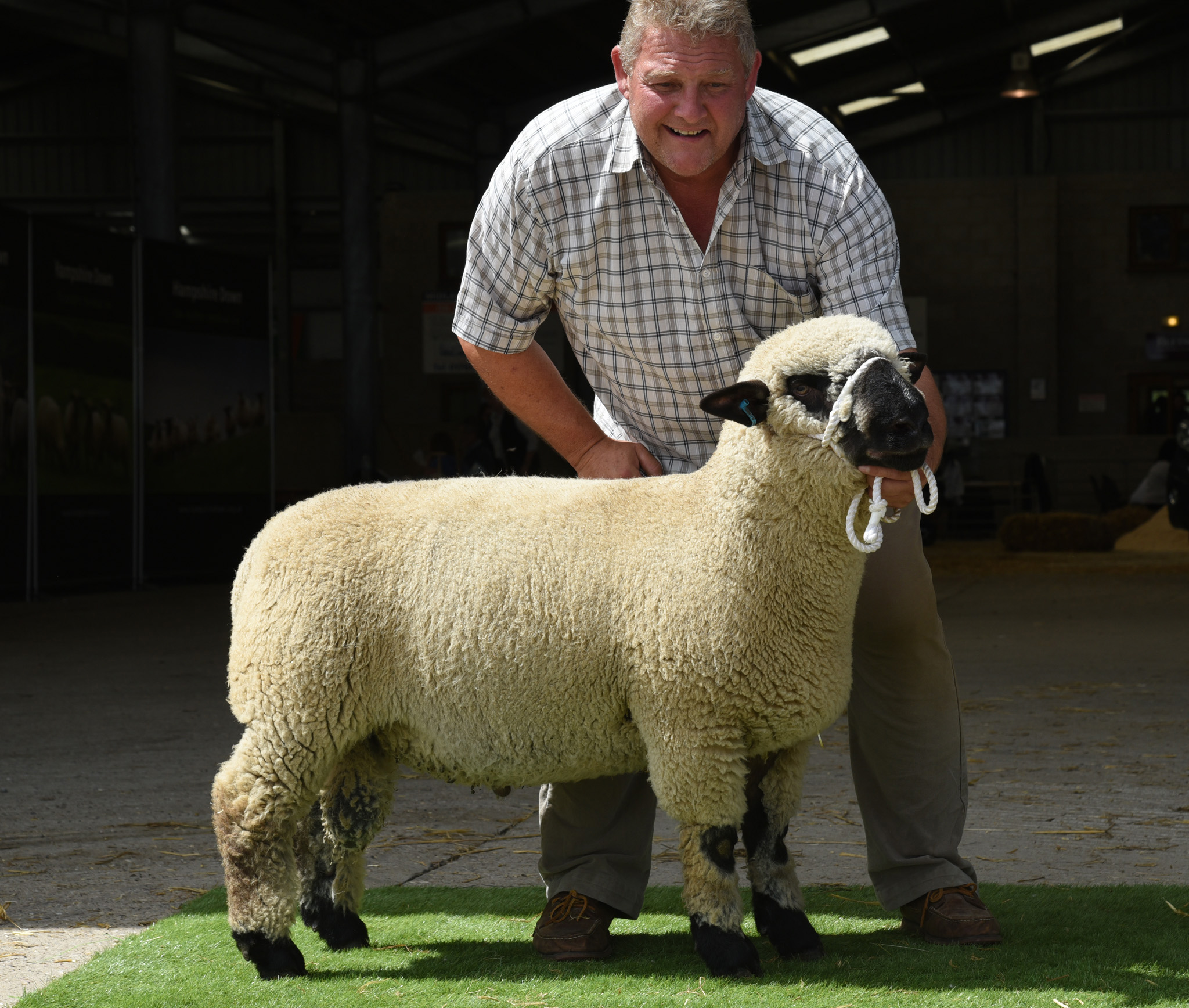 Ram Lamb, 1500gns from Birkwood, THORBECK