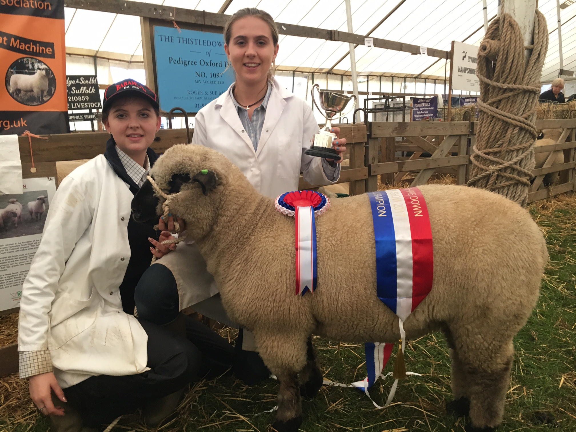 Breed Champion, Untrimmed Ewe Lamb - MORLEY FLOCK