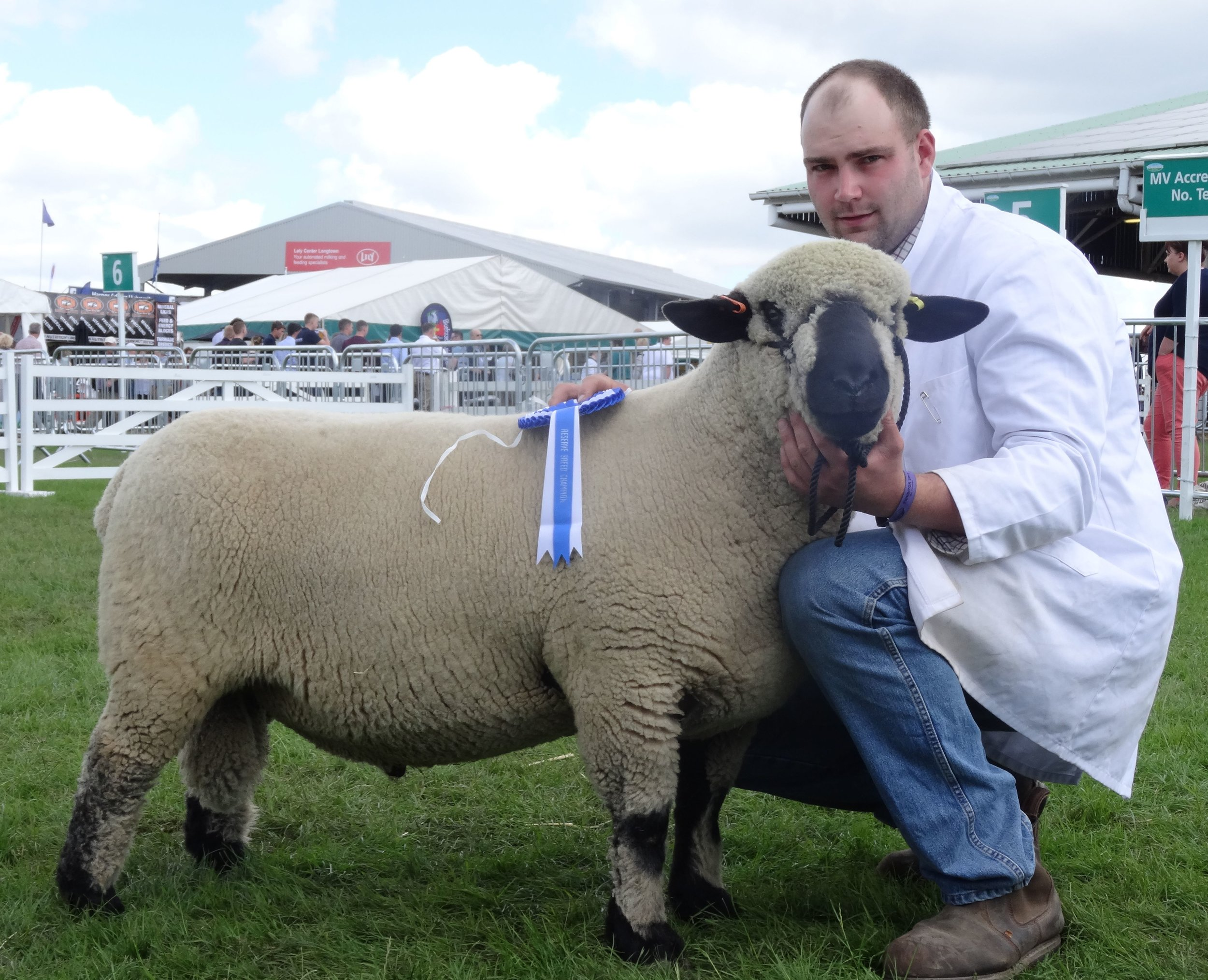 RESERVE CHAMPION - Shearling Ram from HALIKELD
