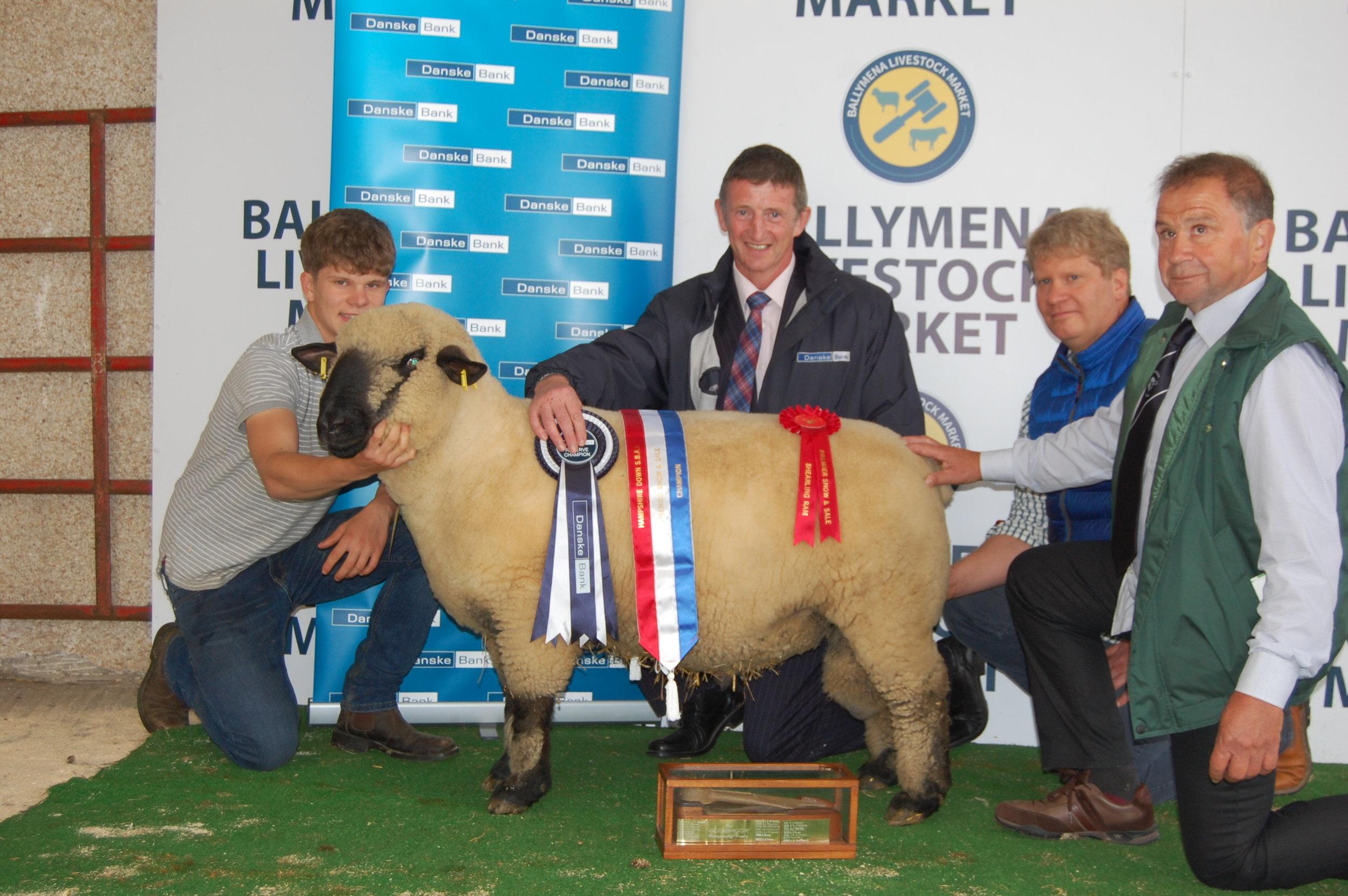 Champion Shearling Ram, LENADERG
