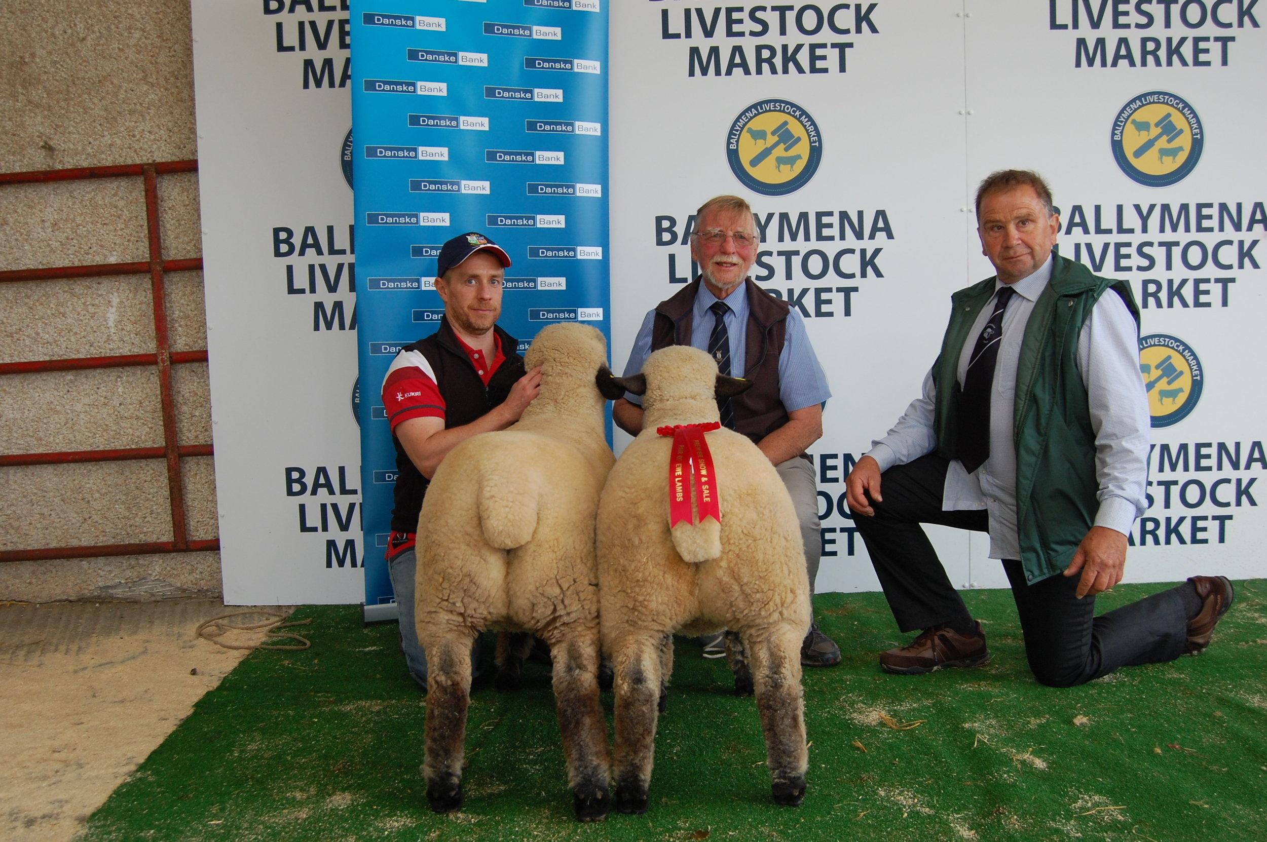 1st Pair Ewe Lambs, LOUGHAN MOSS