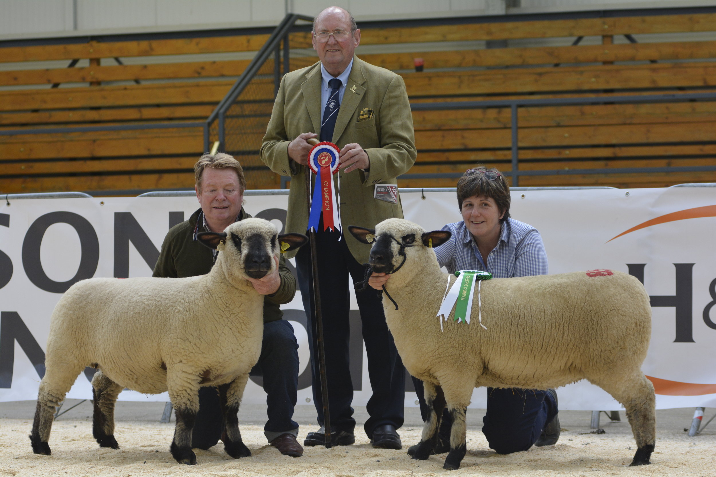 Show Champion/leading price, Shearling Ewe from BALLYCREELLY. Reserve Show Champion from GRAYLEN, a high index ewe lamb by Kelsey Icon which sold for 700 gns. Pictured with show judge Jim Cresswell
