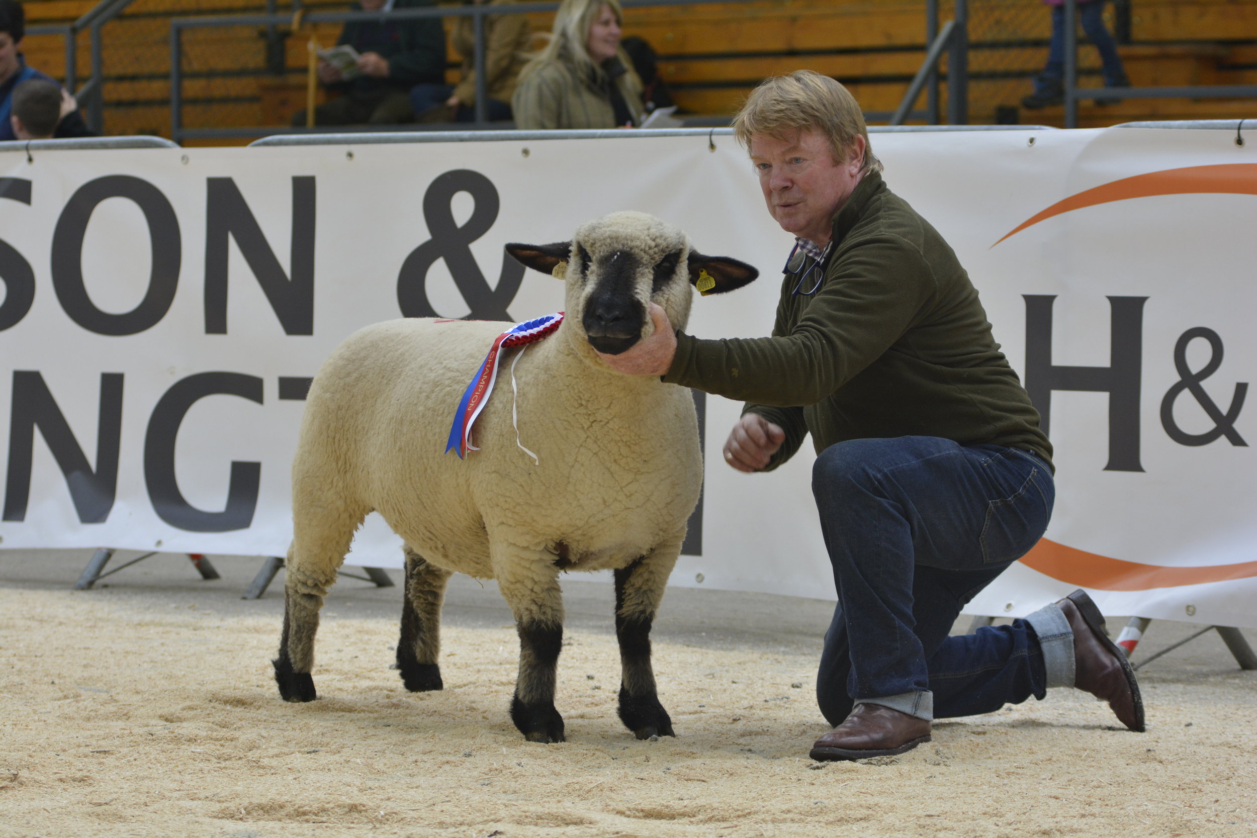 Champion. Ballycreelly Shearling Ewe