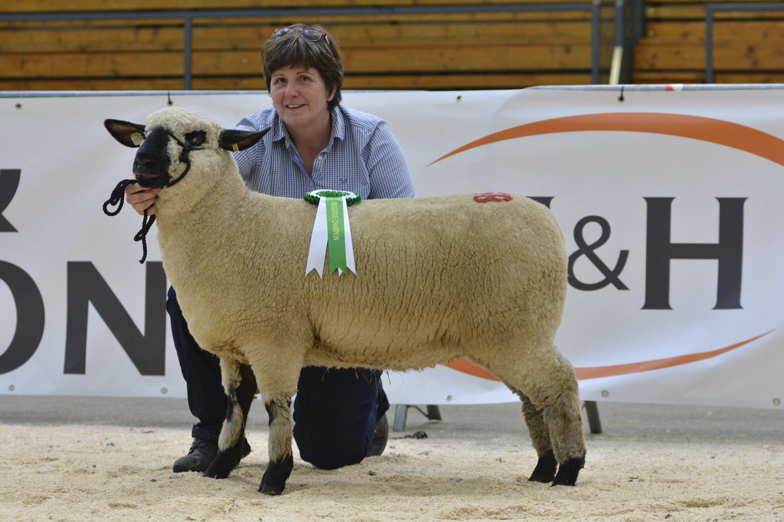 Reserve Champion, Graylen Ewe Lamb