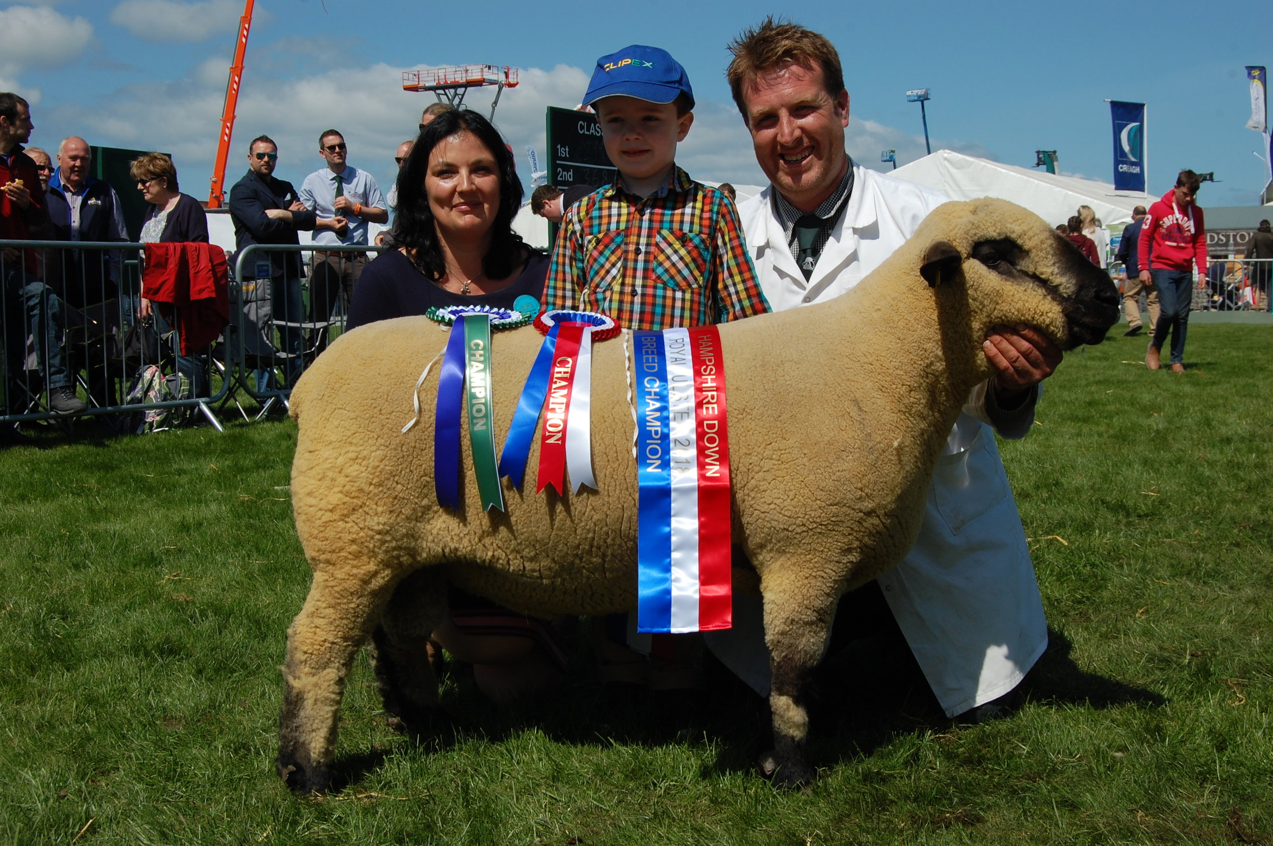Sean Doylechampion  Shearling Ram, sired by Ashley Black Jack and bred by a Loughbrea ewe..JPG