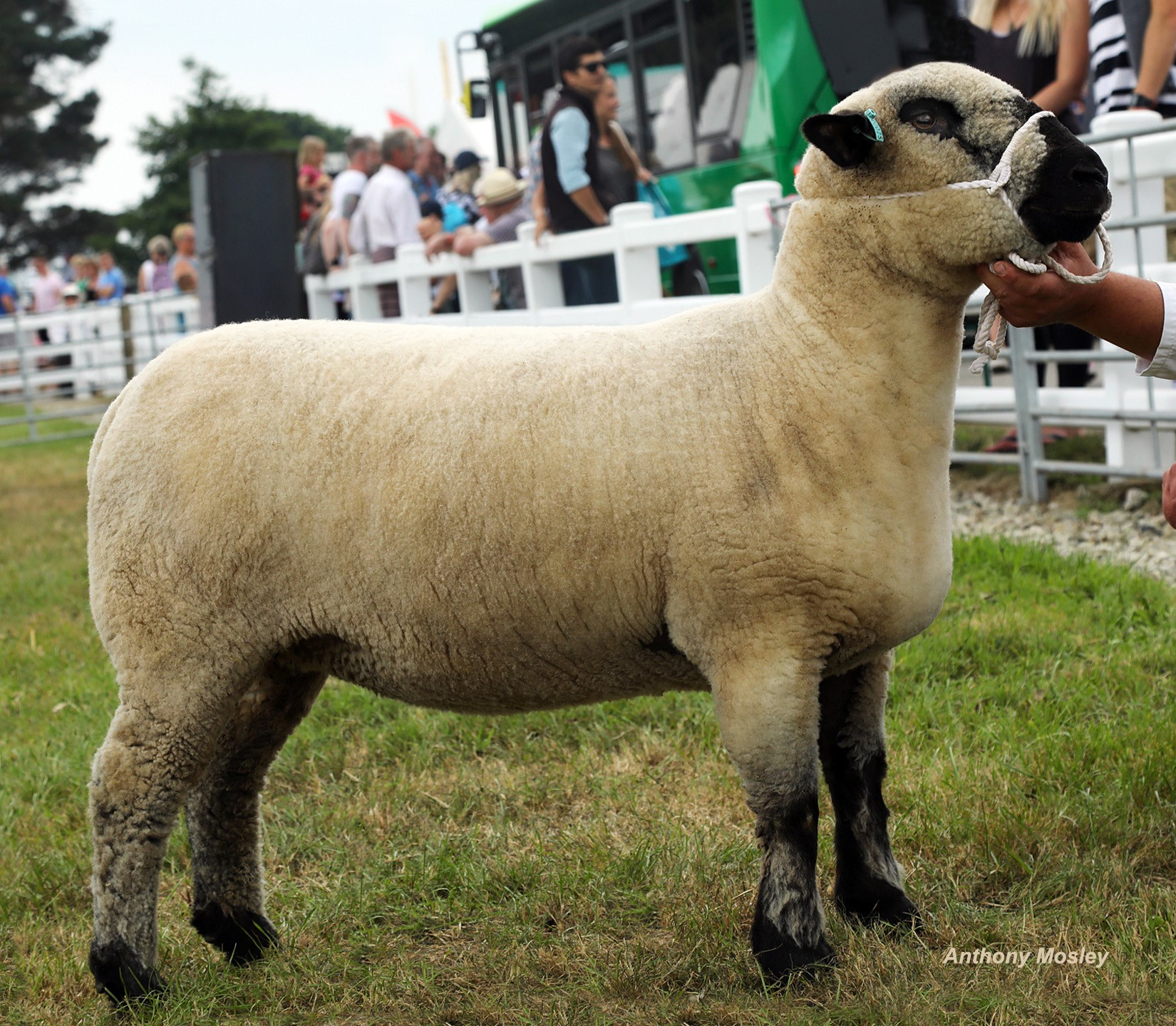 Breed Champ TREWORTHAL.jpg