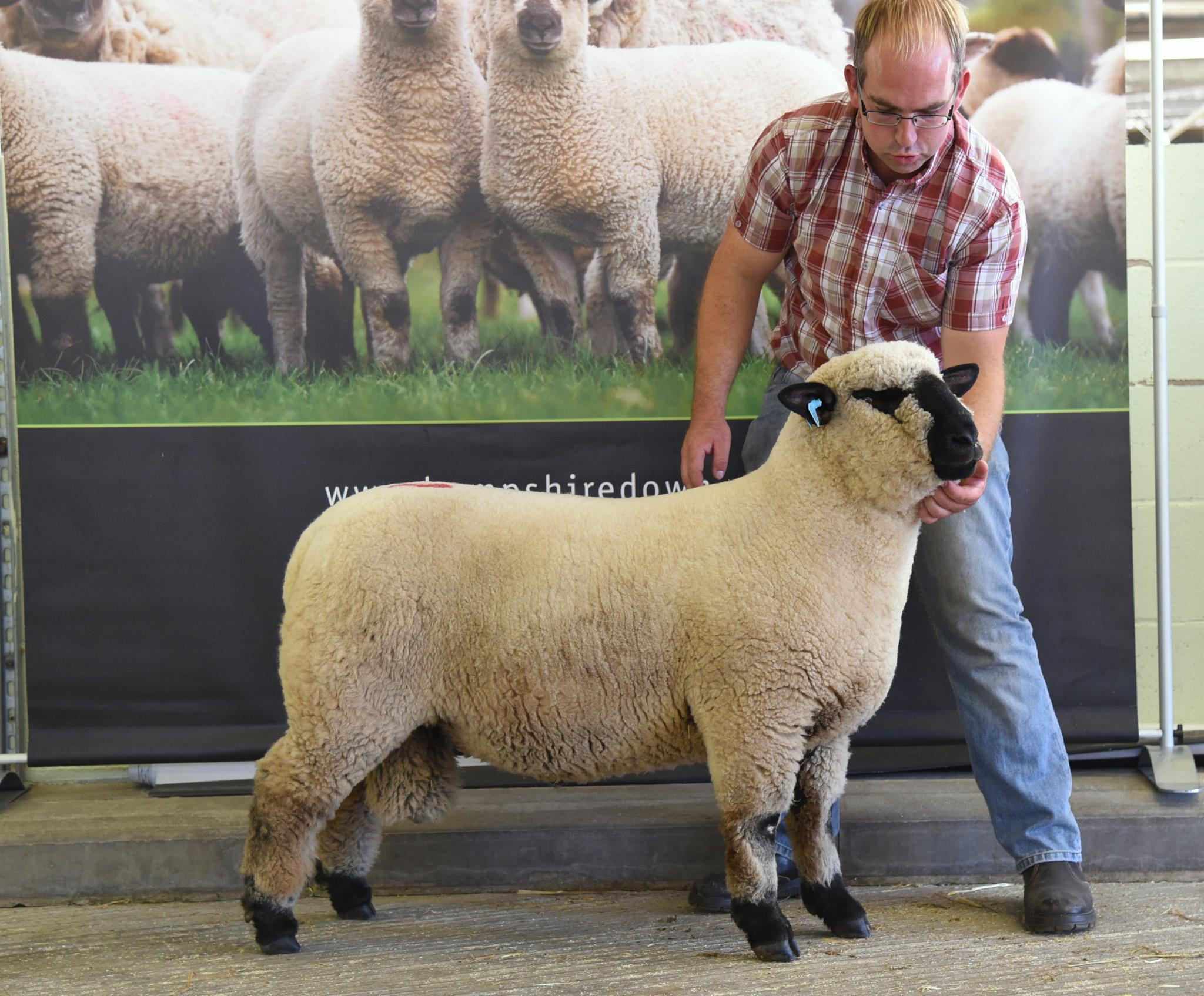 Leading Price, Ram Lamb from Matthew Jones and Rebecca Smith, BIRCHFIELD FLOCK