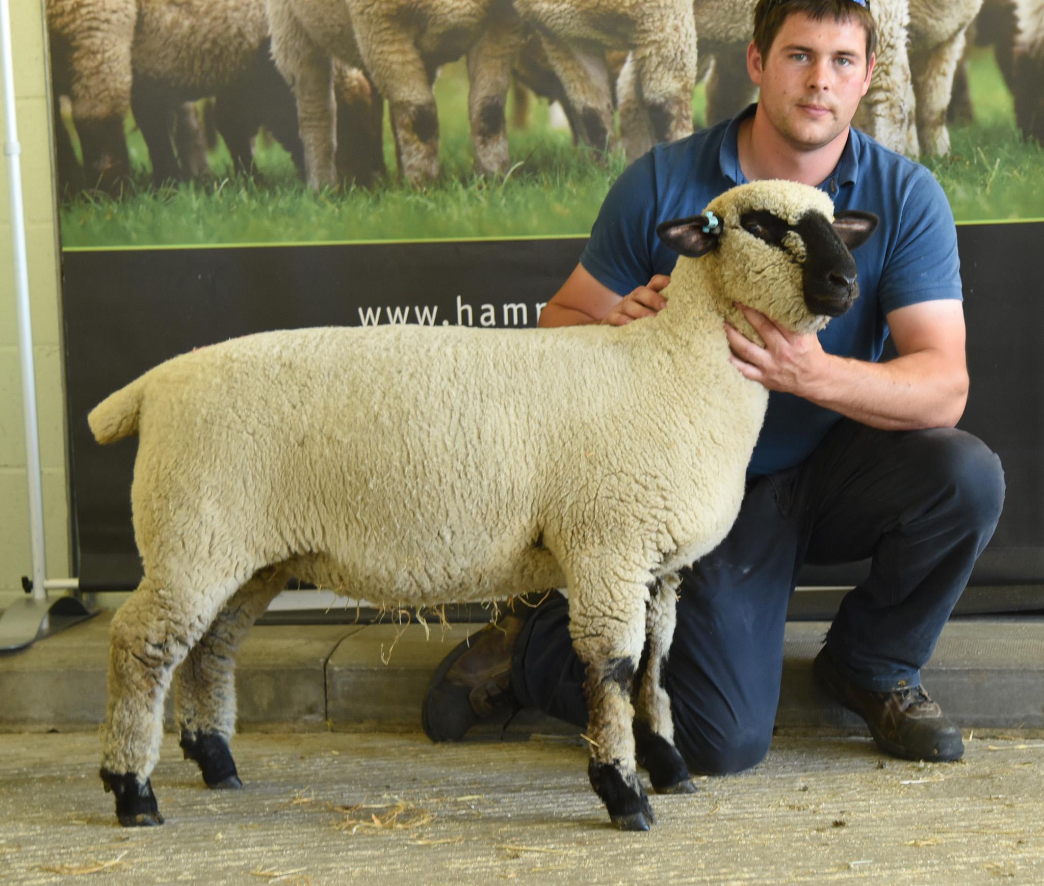 Best selling ewe lamb, from Austyn Chapman and Nikki Wadkins, EPPLEBY FLOCK