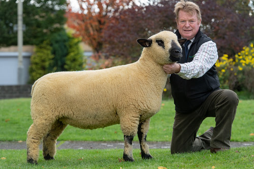 TOP PRICED LOT, SHEARLING EWE FROM BALLYCREELLY, IN LAMB TO BALLYCREELLY 007, SOLD FOR 1000 GUINEAS TO T.MARSHALL, PITGAIR, TURRIFF