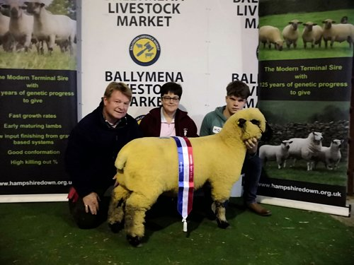 SHOW CHAMPION, EWE LAMB FROM BALLYCREELLY