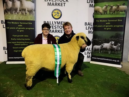 RESERVE SHOW CHAMPION, SHEARLING EWE FROM BALLYCREELLY