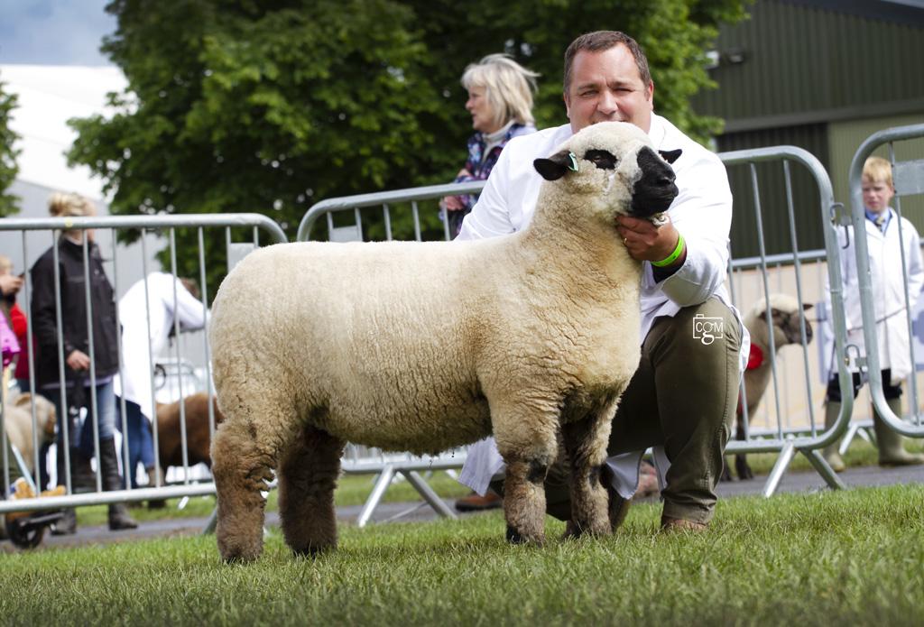 Hampshire-Trimmed-Ewe-Lamb-0297.jpg