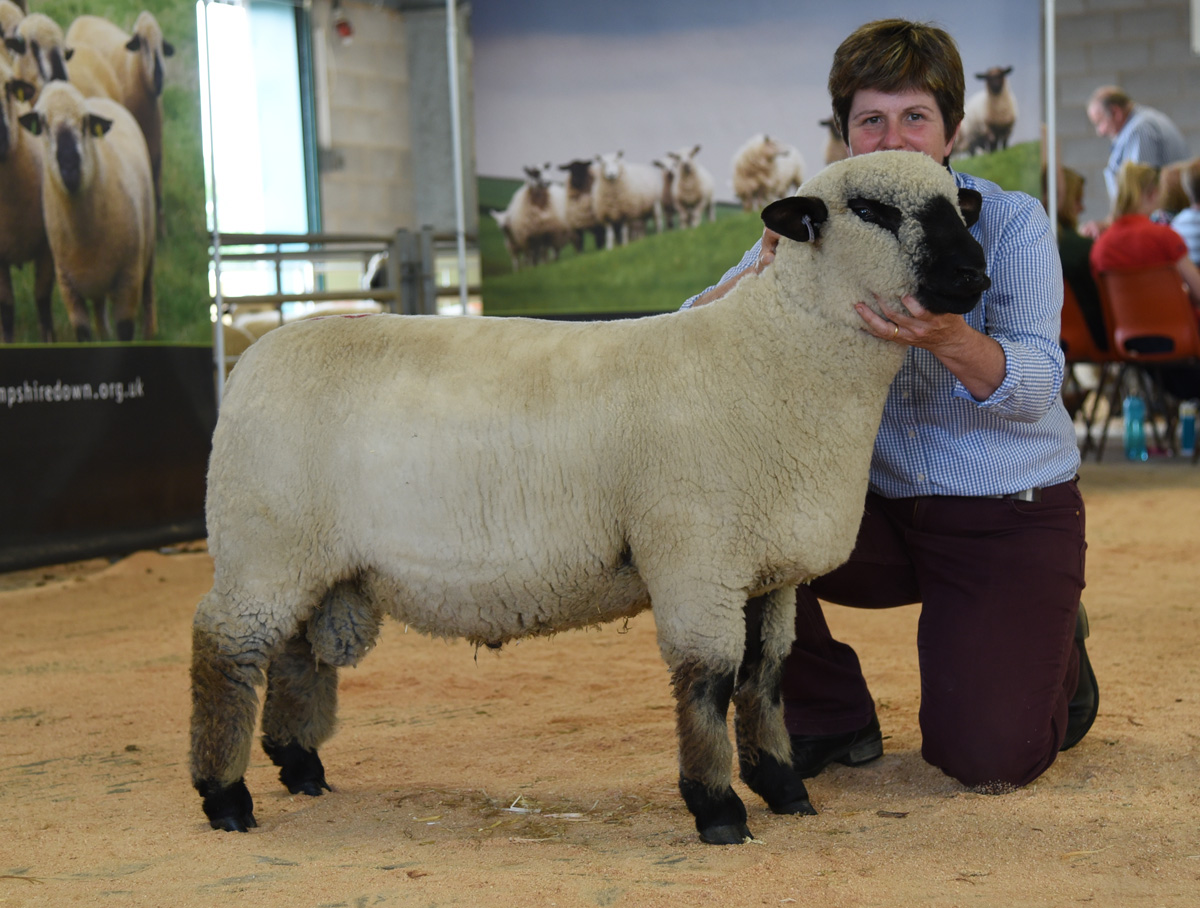 Lot 57 Ram Lamb 1500 gns GRAYLEN 24Y1903763 by Graylen Laird out of a homebred ewe. Sold to K P & A E McCarthy, Ballycreelly