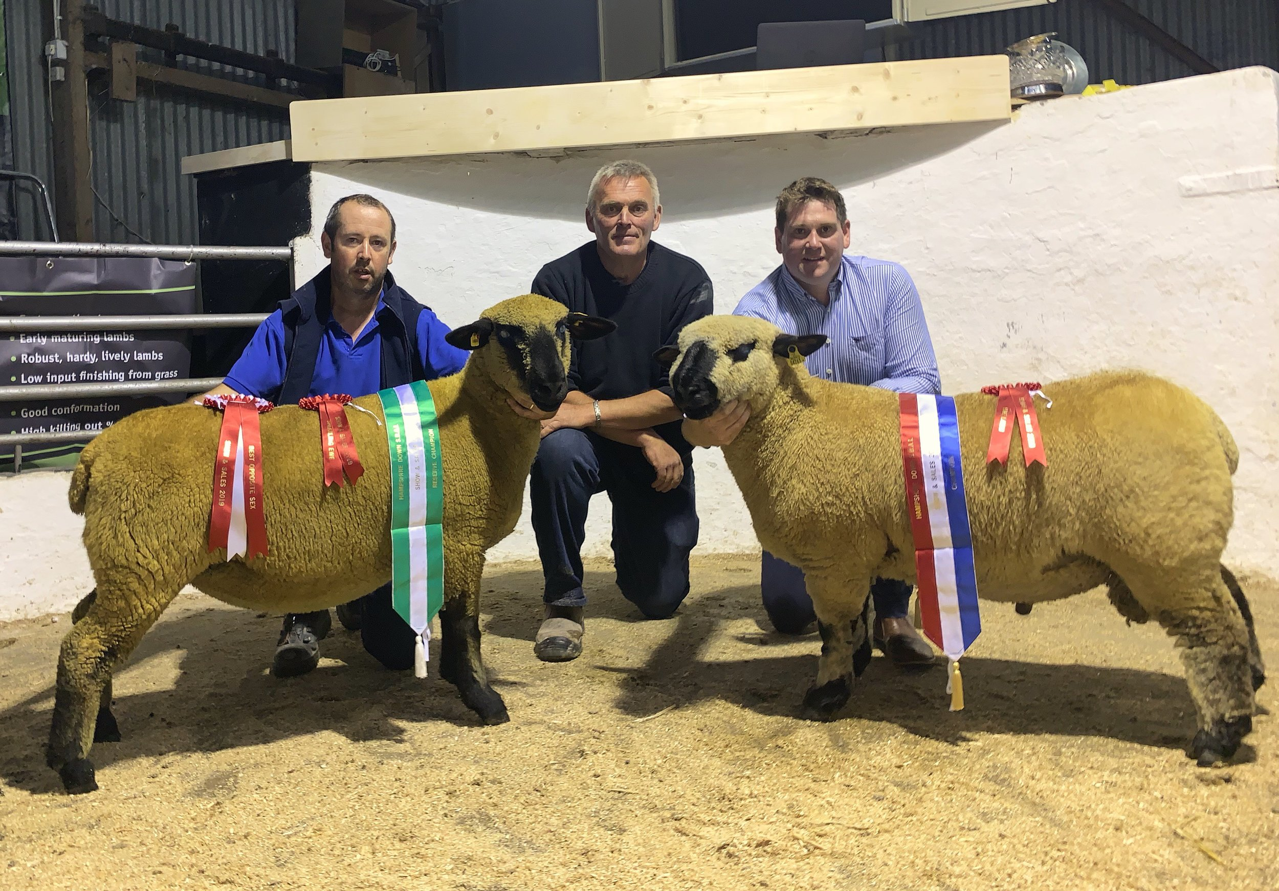 Show Champion (right) Alymer Power's Powerpack Ram Lam. Reserve Champion (left) Bernard Losty's Shearling Ewe.   Pictured with Judge David Darker