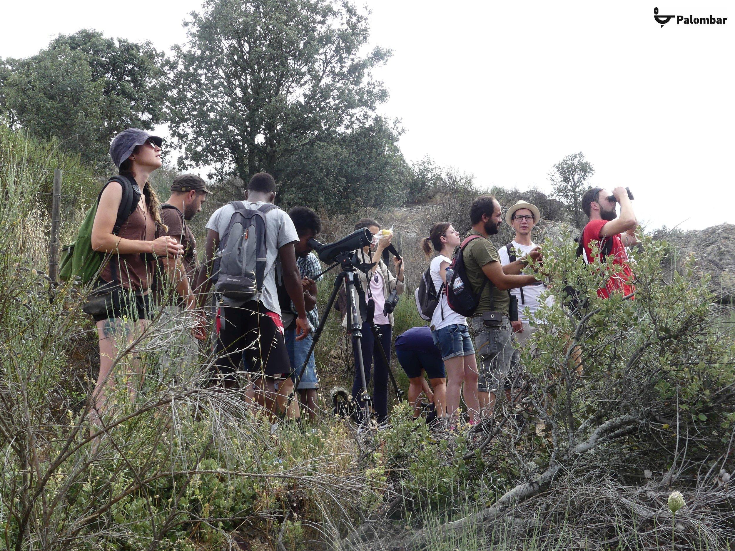 ZPE Rios Sabor e Maçãs e Rio Angueira - observação de aves | 7 de julho de 2018