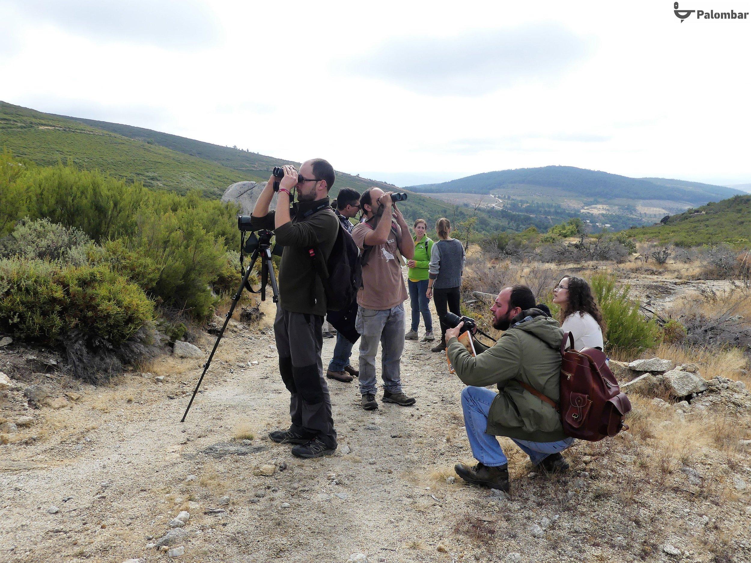 Parque Natural de Montesinho - observação de aves | 13 de outubro de 2018