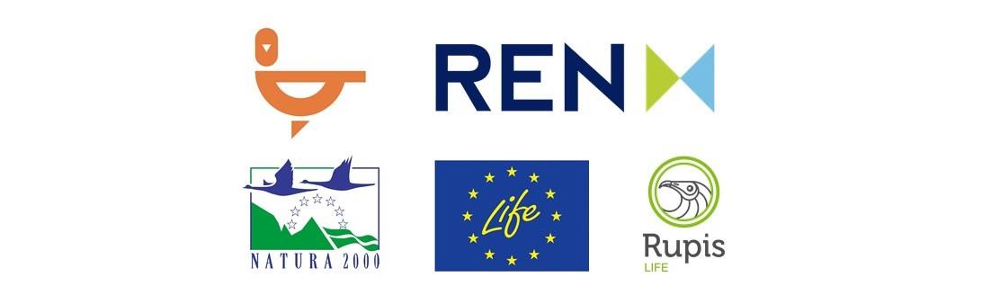 Logos Rupis REN.jpg