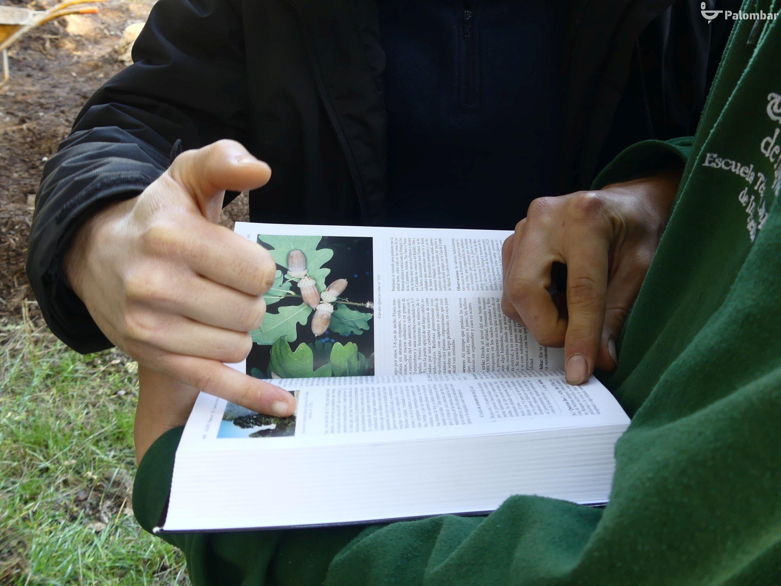 Explicação sobre árvores autóctones.