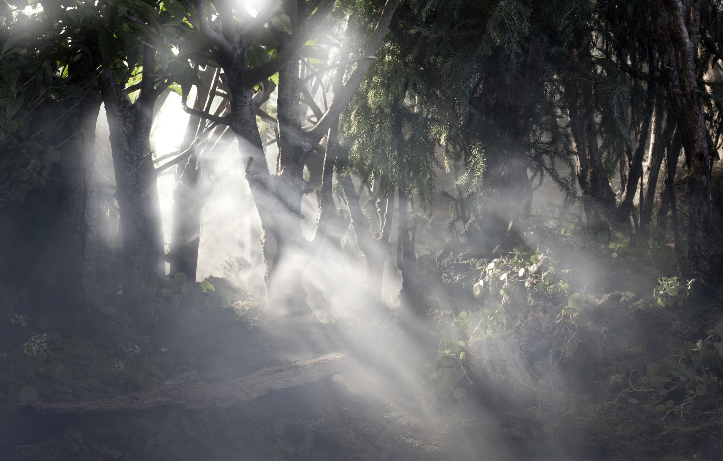 forest dawn.jpg