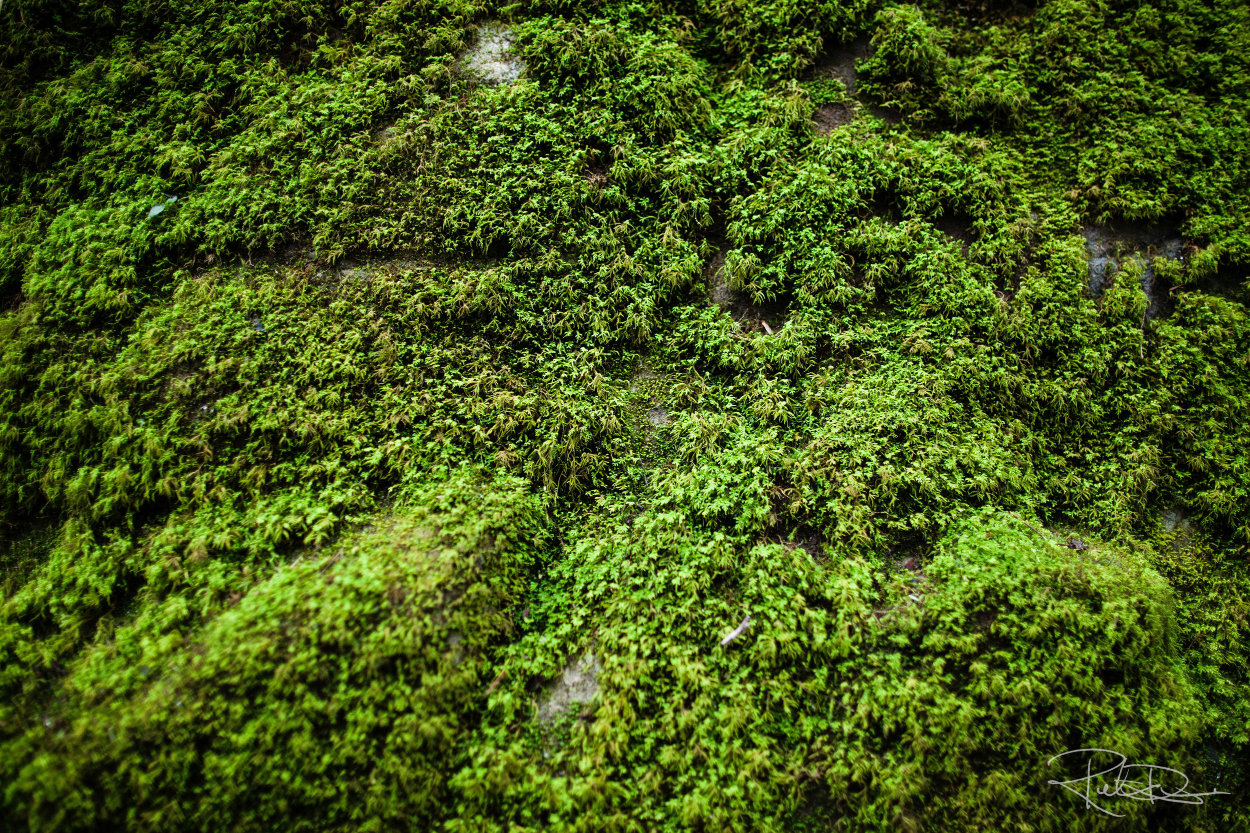 20151231_moss_wild_eco-system_nature_close up_IMG_4018 copy_lower res.jpg