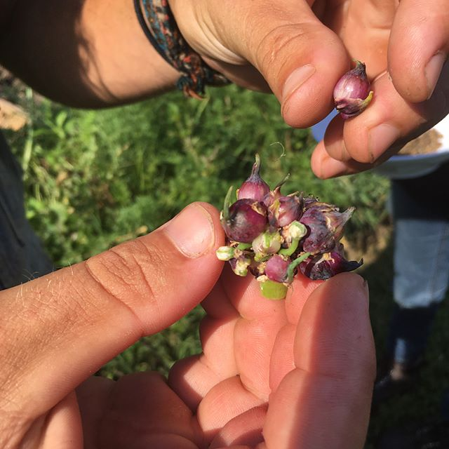 Seed Saving with Farmer Dave  @the.eco.institute #odysseyfellowship #permaculture #seedsaving #ecoinstitute #farmerdave #permaculturegarden #seeds #seedsofchange #foodismedicine #polinators #seeds
