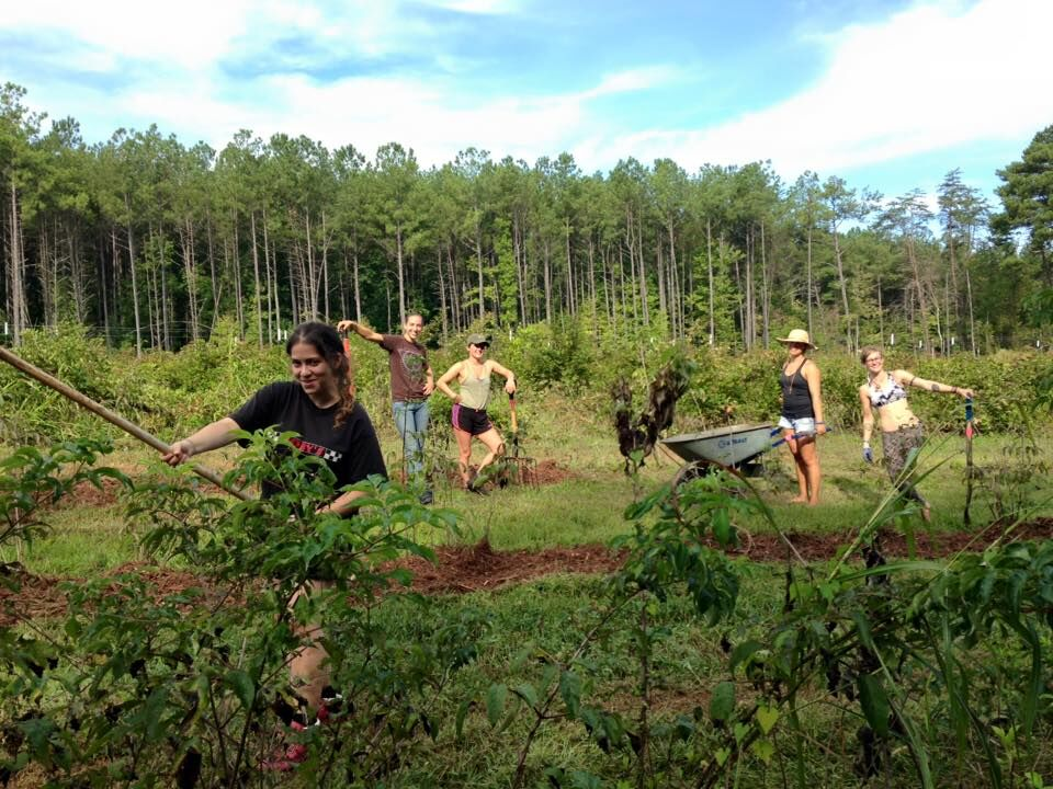 the-eco-institute-chapel-hill-nc-permaculture-immersion-organic-edible-gardening-farming-education.jpeg
