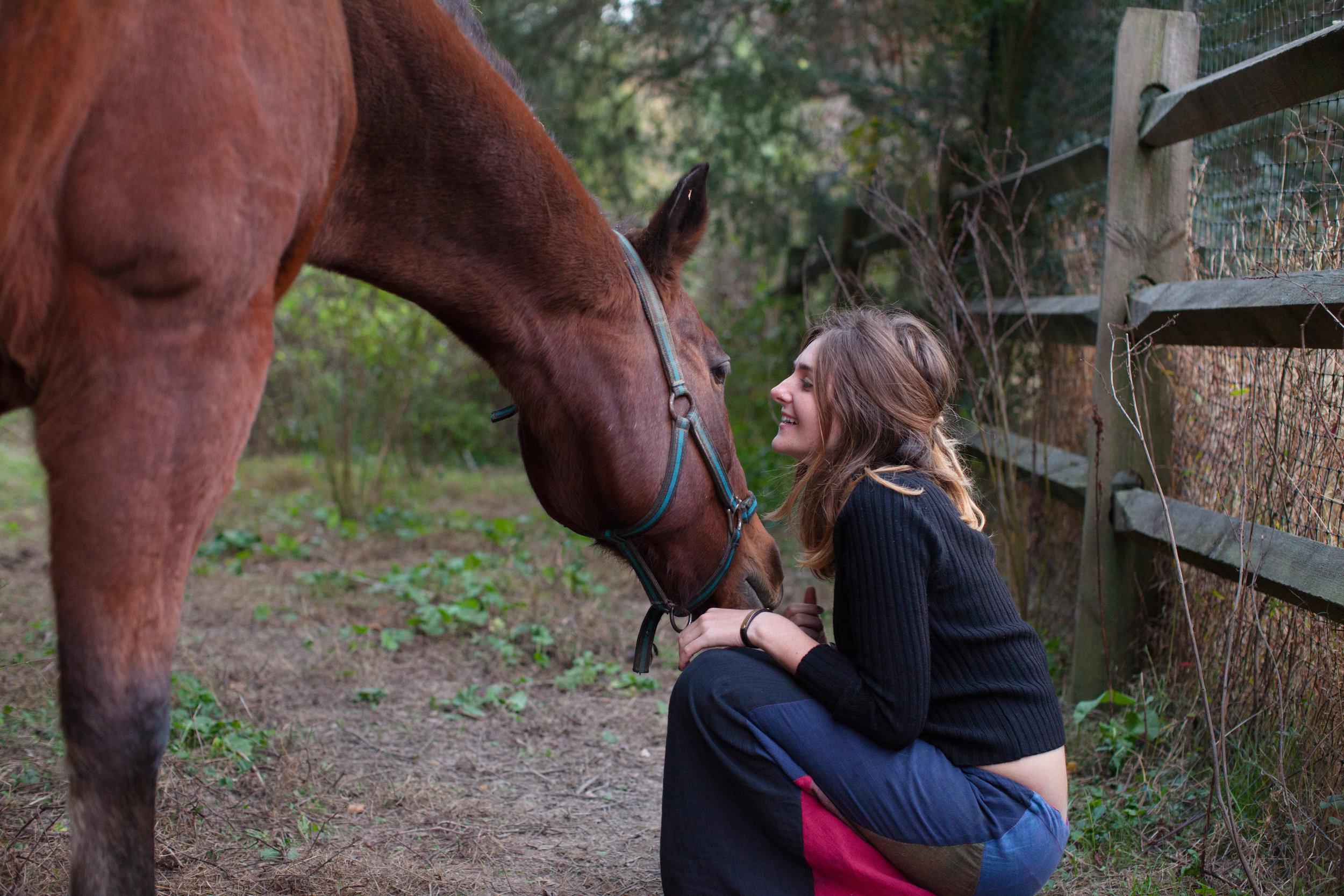 the-eco-institute-chapel-hill-nc-rising-earth-permaculture-environmental-education-gap-year-fall_autumn_horse_anna feldman_rising_earth.jpg