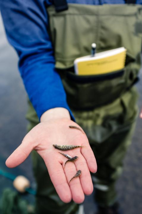 NH_080718_Fisheriesresearch-7.jpg