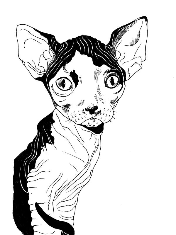 kitty-600.jpg