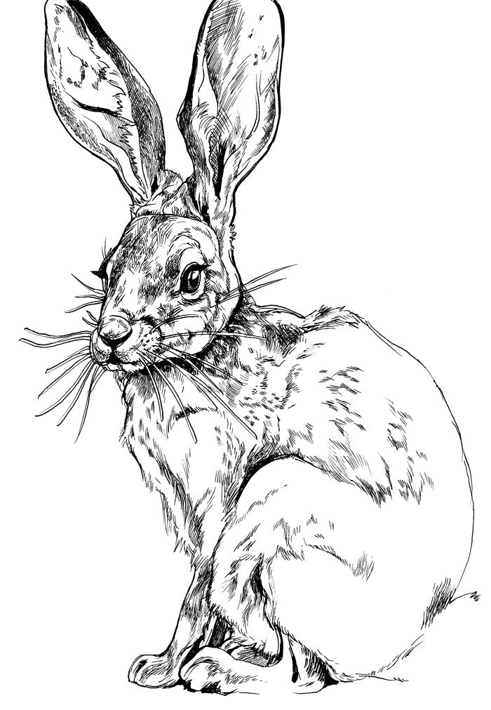 hare-700.jpg