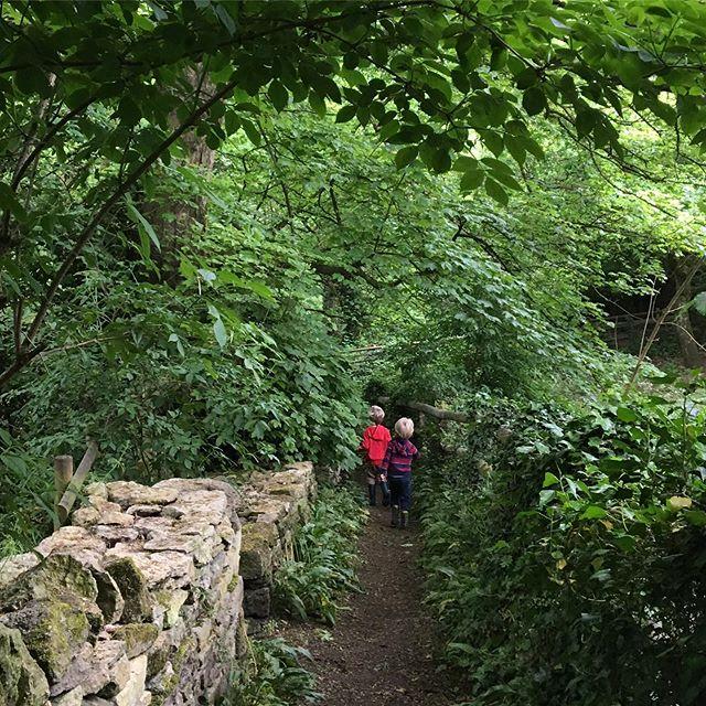 It's a Box Woods kind of day. #boxwoods #exploreengland #englishcountryside #britishspring #halftermfun #byways #britishwoods
