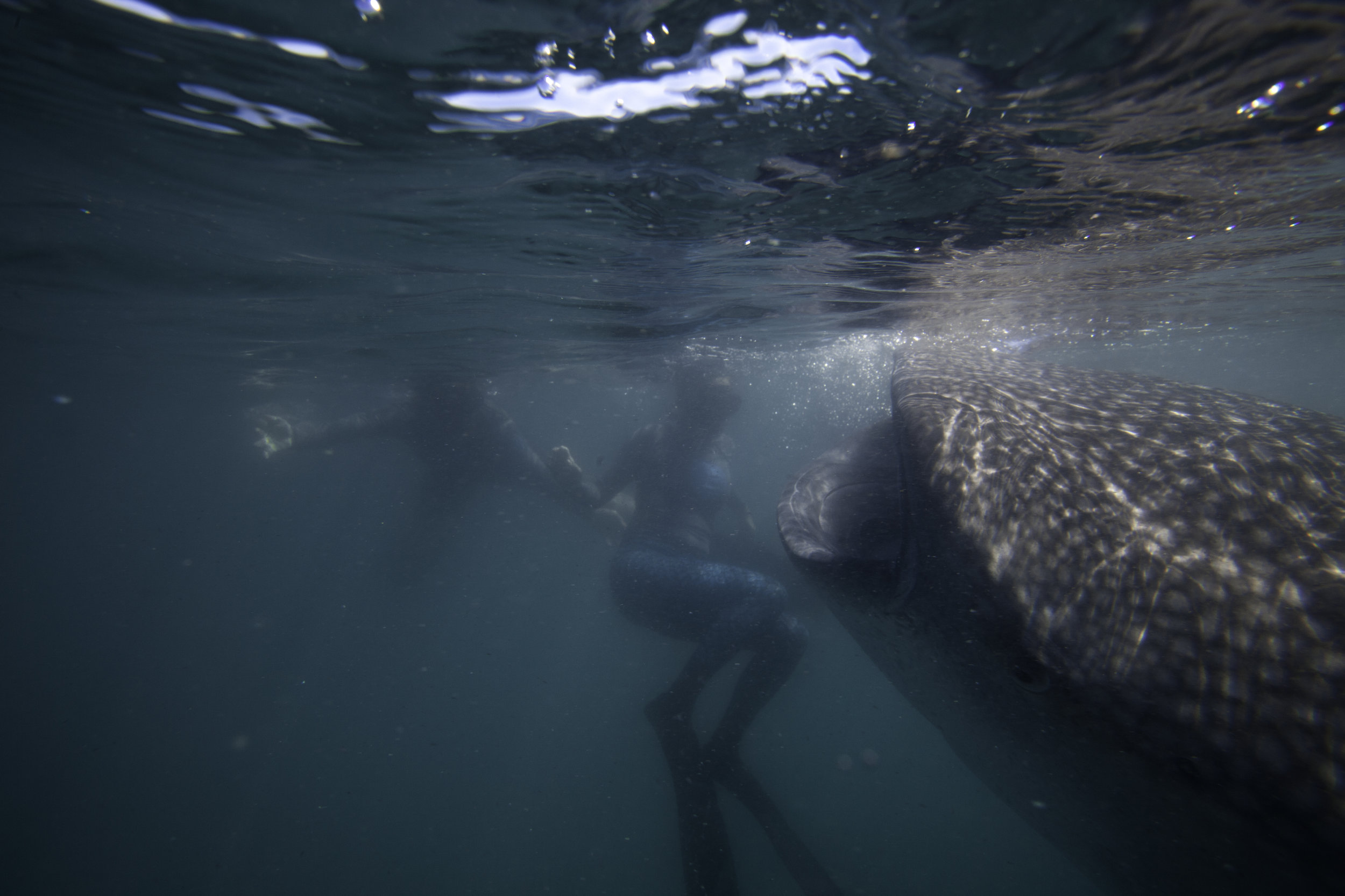 Jen & The Whale Shark