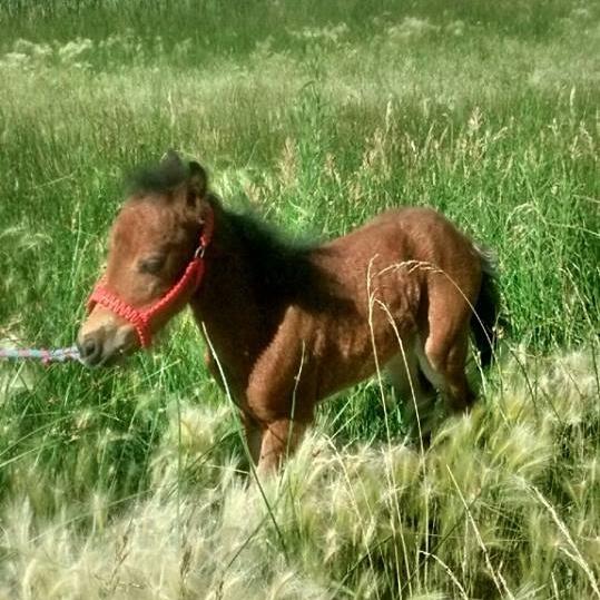 babyhorse.jpg