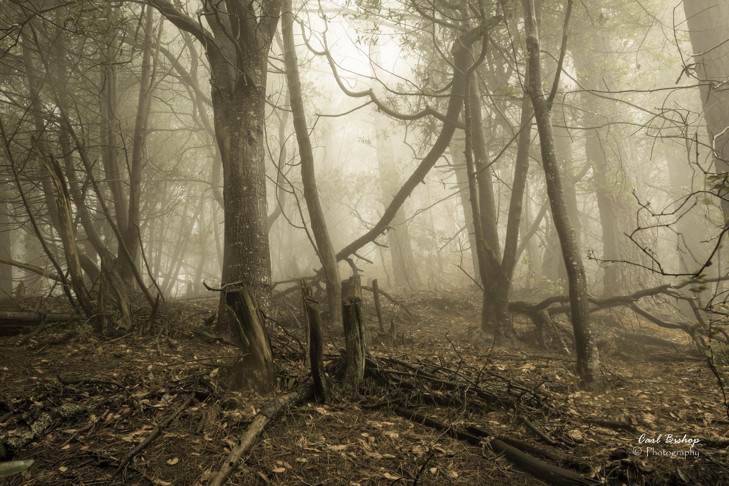 GloomywoodsLRAgedWM.jpg