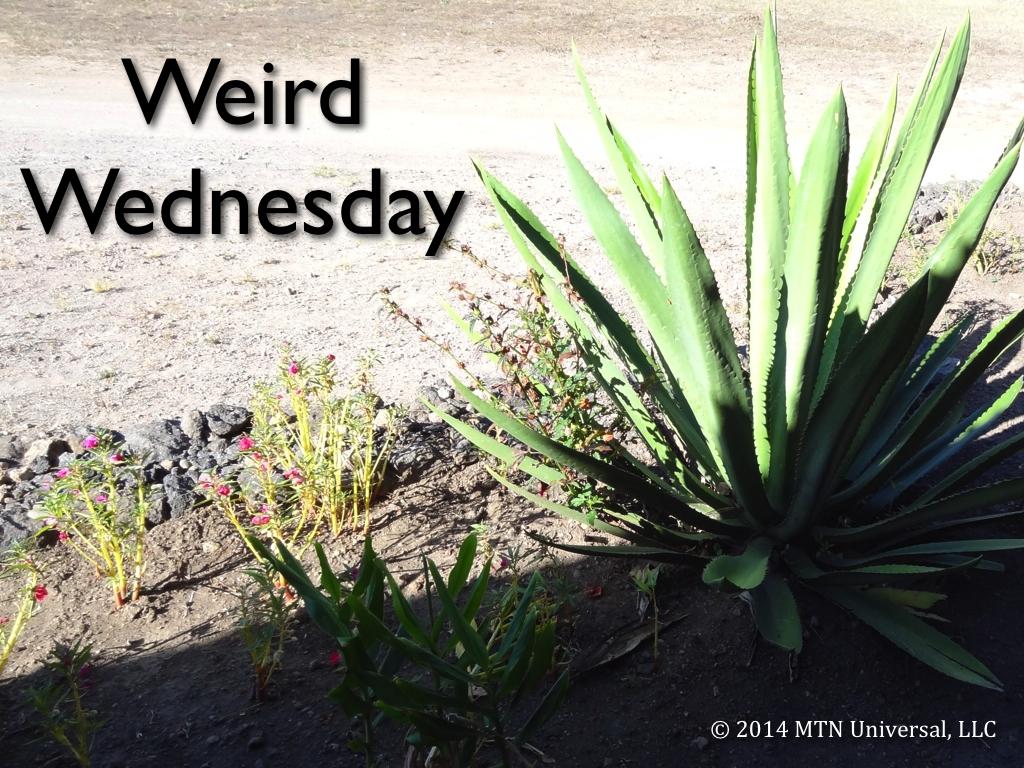 Weird-Wednesday.001.jpg