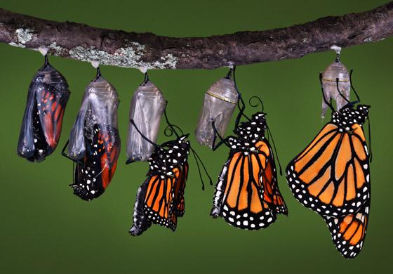 Butterfly-Transformation.jpg