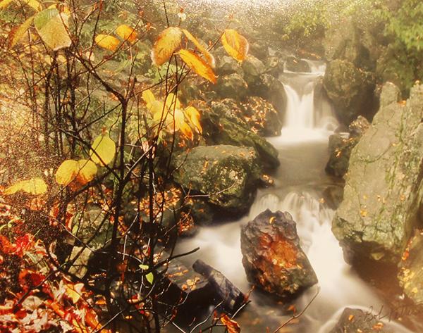Autumn At Ricketts Glen By: Bob Patterson