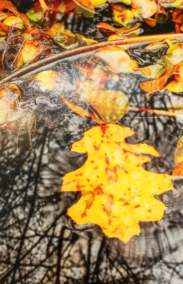 Autumn Offering By: Jan Fiorina