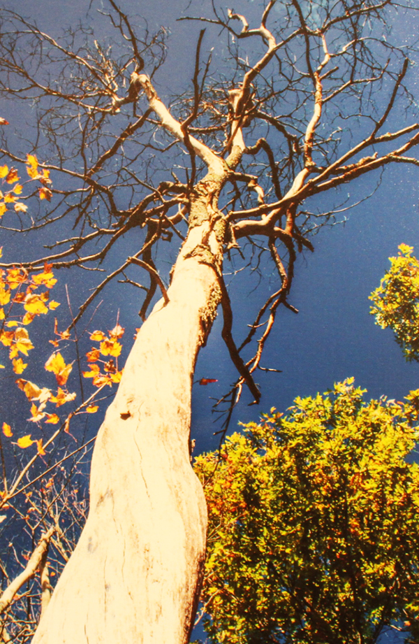 Leaves and Limbs By: Gordon Sarti