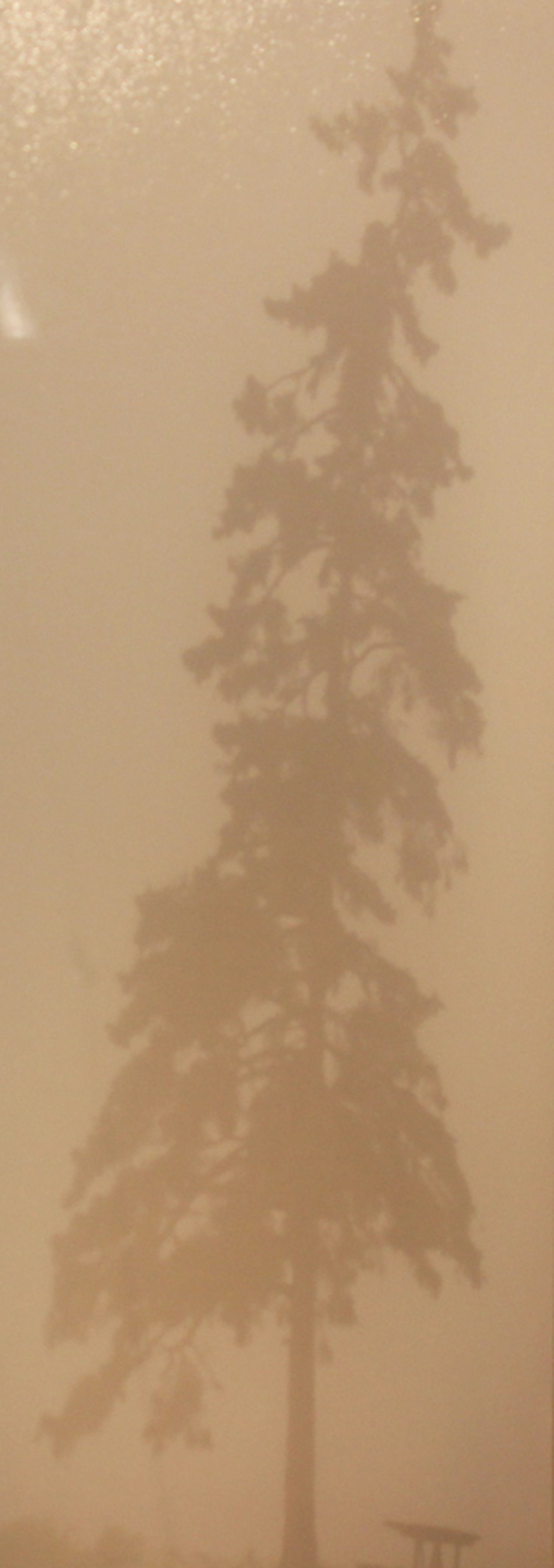 Tree in Fog By: Christine Patterson