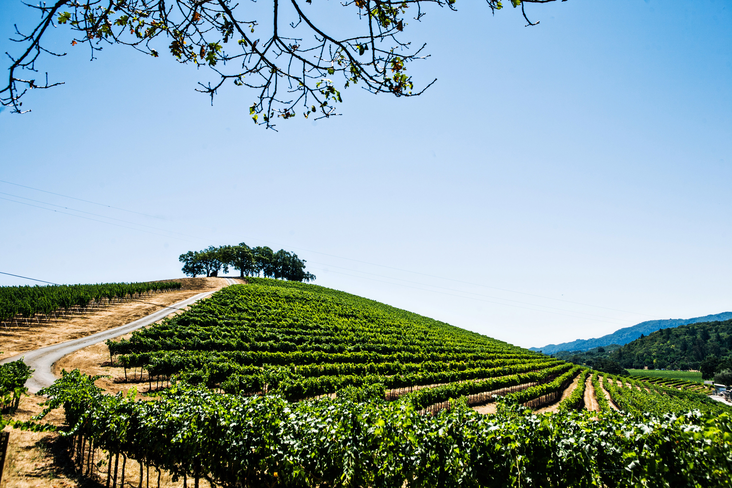 N Sonoma Valley hills.jpg