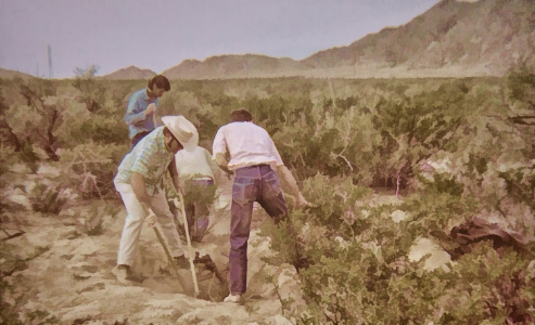 Researchers dig to uncover the root systems of a desert shrub. It turned out to be a very difficult task.
