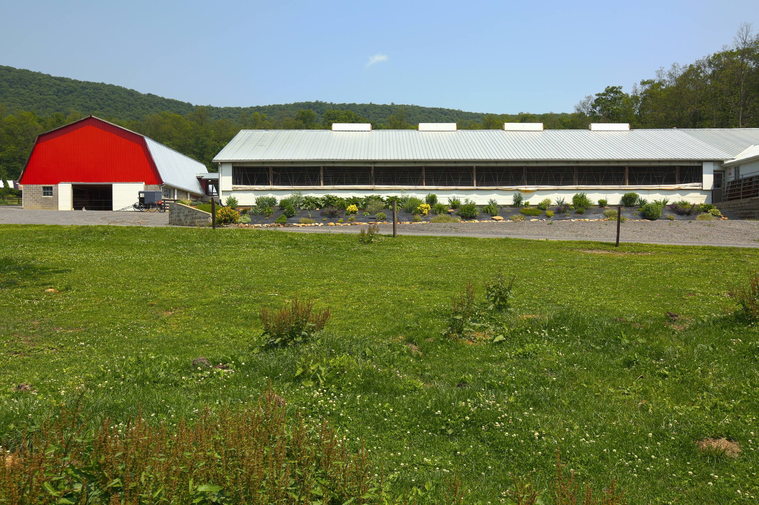 barn with buggy - Copy.jpg