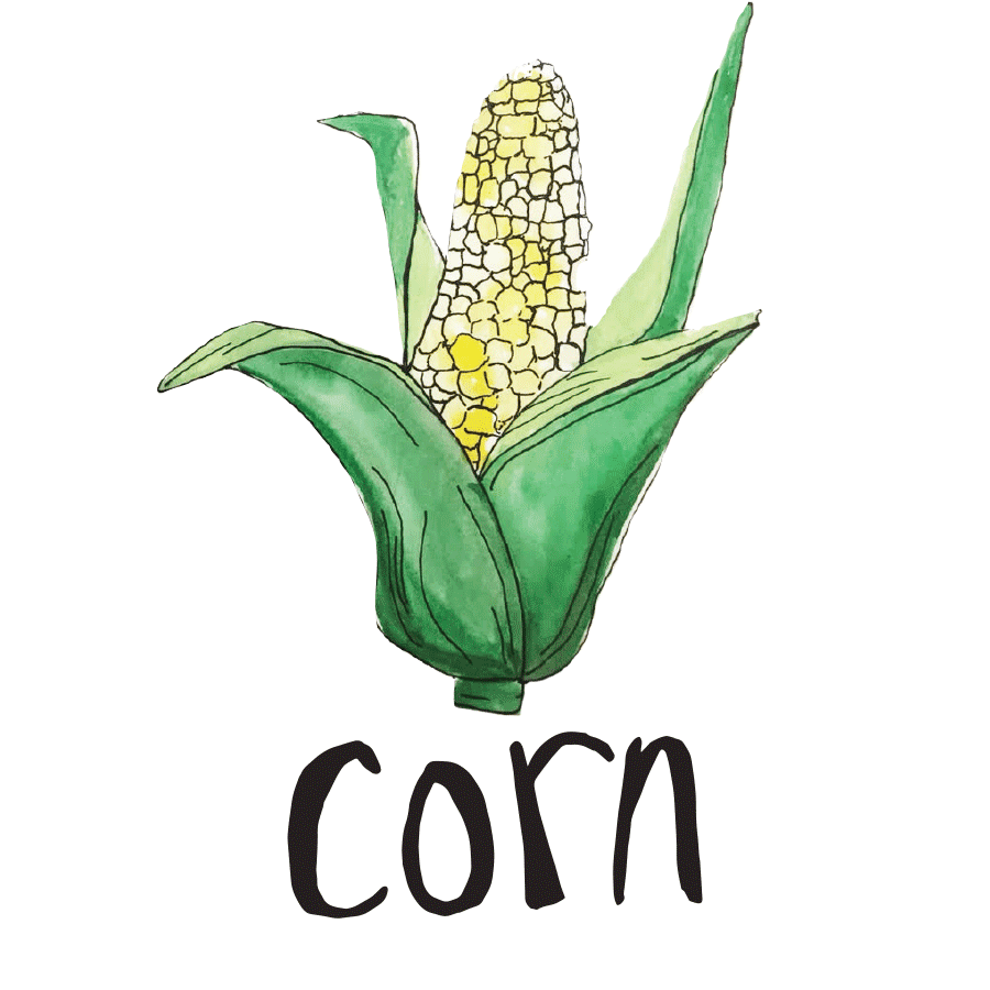 veggie_illustrations-3.png