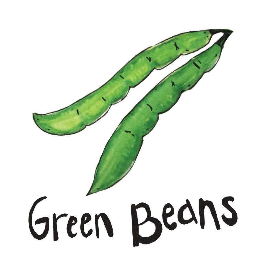 veggie_illustrations-4.png