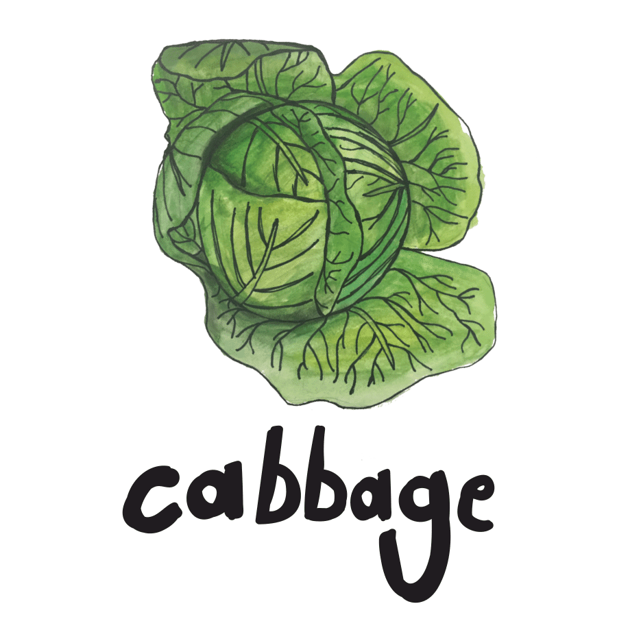 veggie_illustrations-7.png