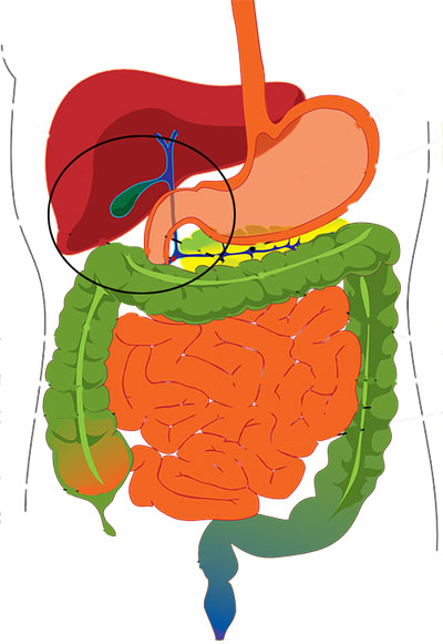 Gall Bladder and detox