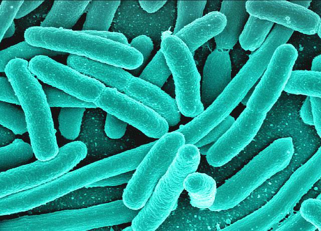 Bowel bacteria taught on UK detox retreats